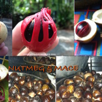 nutmeg and mace spice 200x200 Random Foodie Stuff